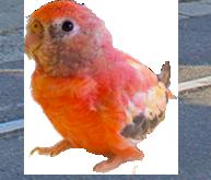 小鳥イメージ